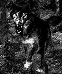 [ The attack: image (cc) 2005 Djibril ]