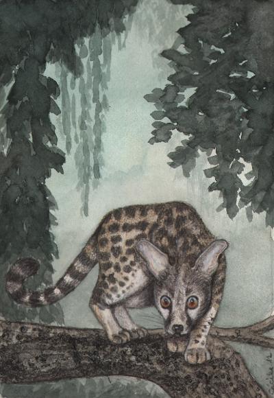 [ Civet, © 2012 Cécile Matthey ]