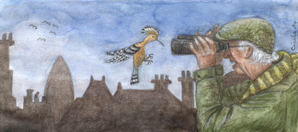 [ Hoopoe, © 2014 Cécile Matthey ]