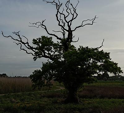 [ Tree, © 2020 Fiona M. Jones ]