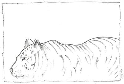 [ Tiger stalking, © 2018 Joyce Chng ]