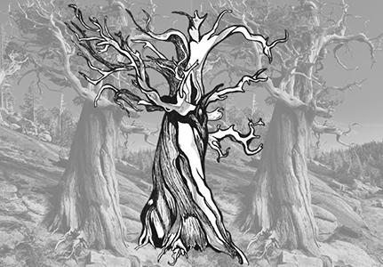 [ Tree roots, © 2017 Rachel Linn ]